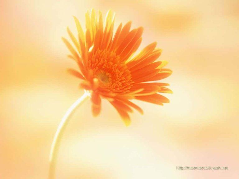 bunga bagus