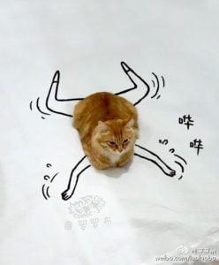 Gambar Kucing Sedang Berenang