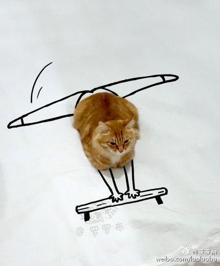 Gambar Kucing Sedang Senam