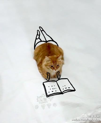 Kucing Sedang Membaca Buku