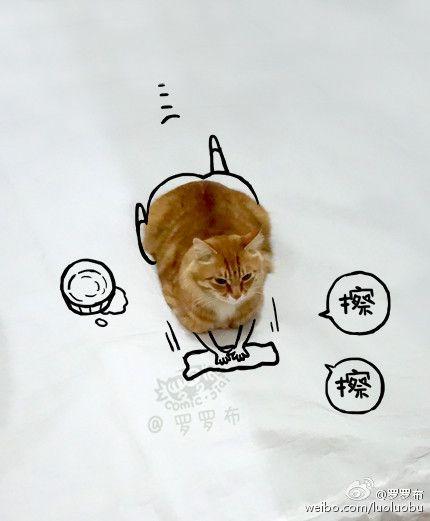 kucing sedang membersihkan lantai mengepel