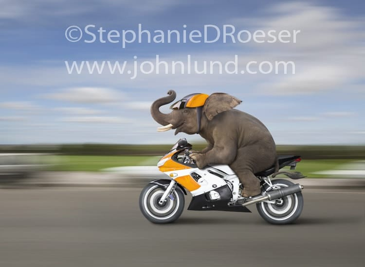 Gajah Naik Sepeda Motor Sport Kencang Kuning Ngebut